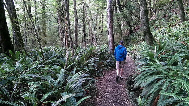 walking and hiking through new zealand nature and parks